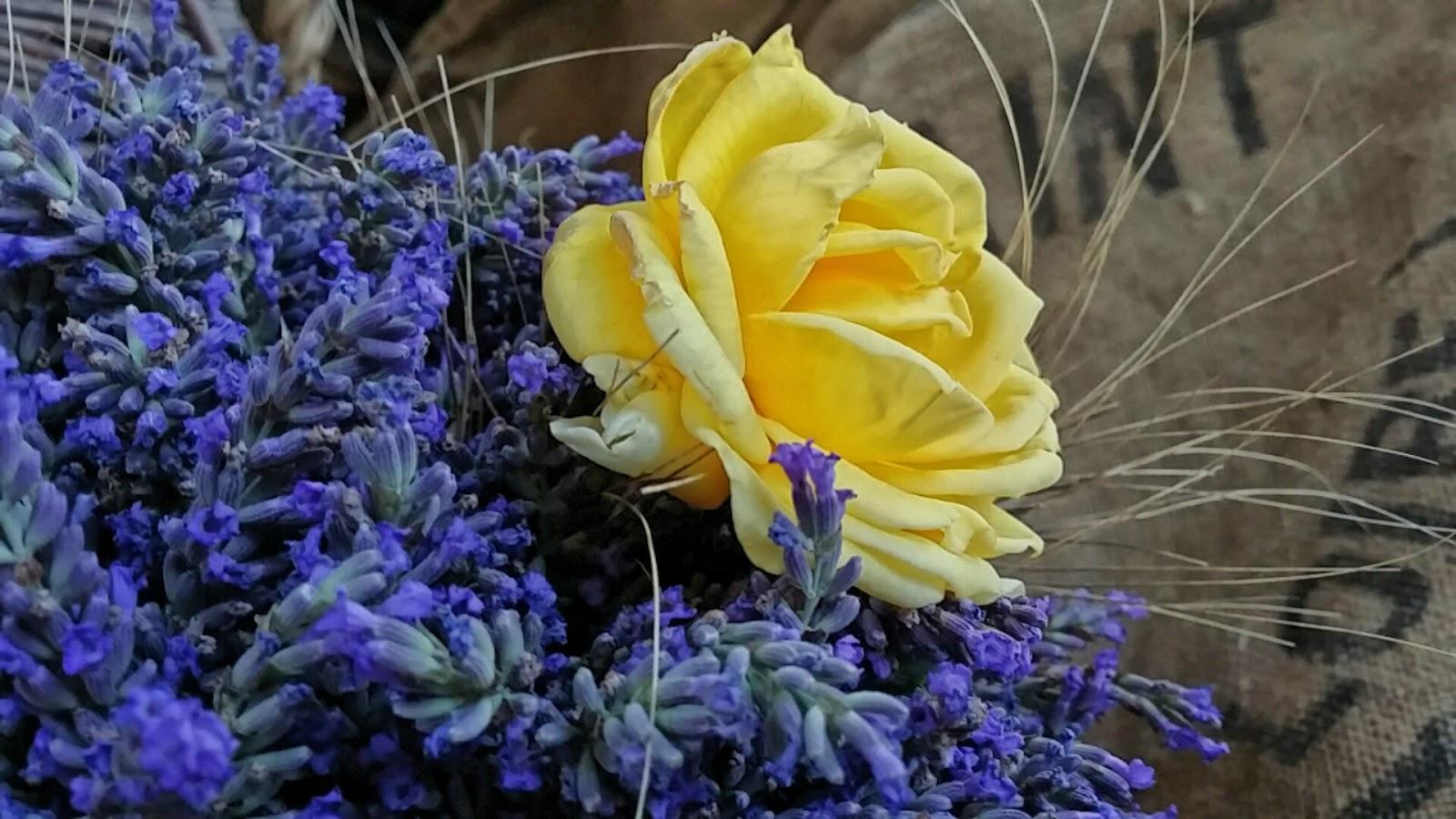 lavande et rose