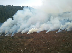 Slash burning can reduce wildfire risk