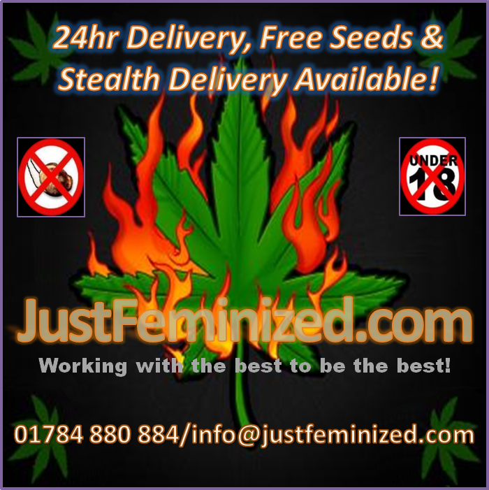 Just Feminized UK Cannabis Seeds Bank
