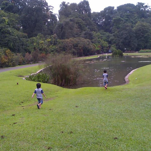 Wordless Wednesday: The Beauty of Bogor Botanical Garden