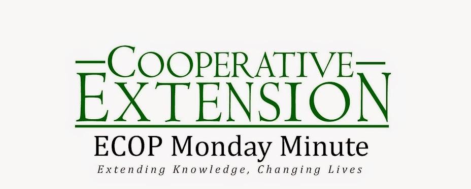 ECOP Monday Minute
