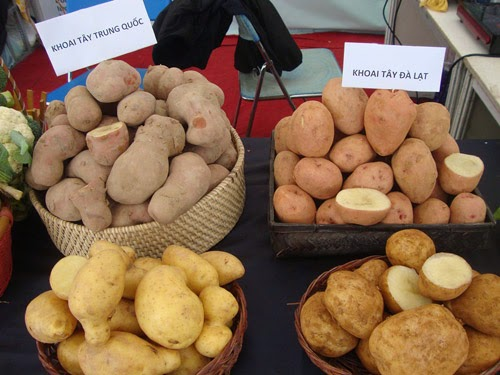 Sự khác biệt giữa khoai tây Đà Lạt với khoai tây trung quốc