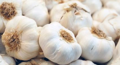 Mamfaat Bawang Putih Untuk Kesehatan