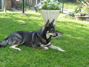 Vår hund Roxy