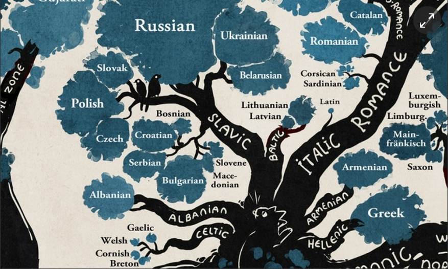 A language family tree
