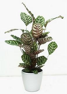 Plantas Ideais para Sala de Apartamento
