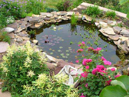 Backyard ornamental pond for Ornamental pond