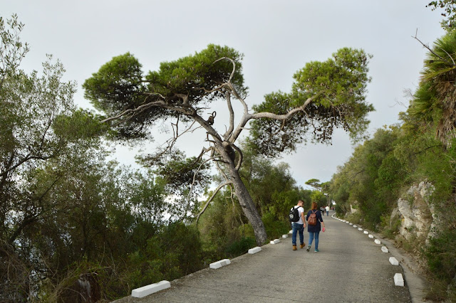 Gibraltar. Piechotą na szczyt Upper Rock.
