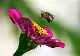 Bunga dan kumbang (ilustrasi)