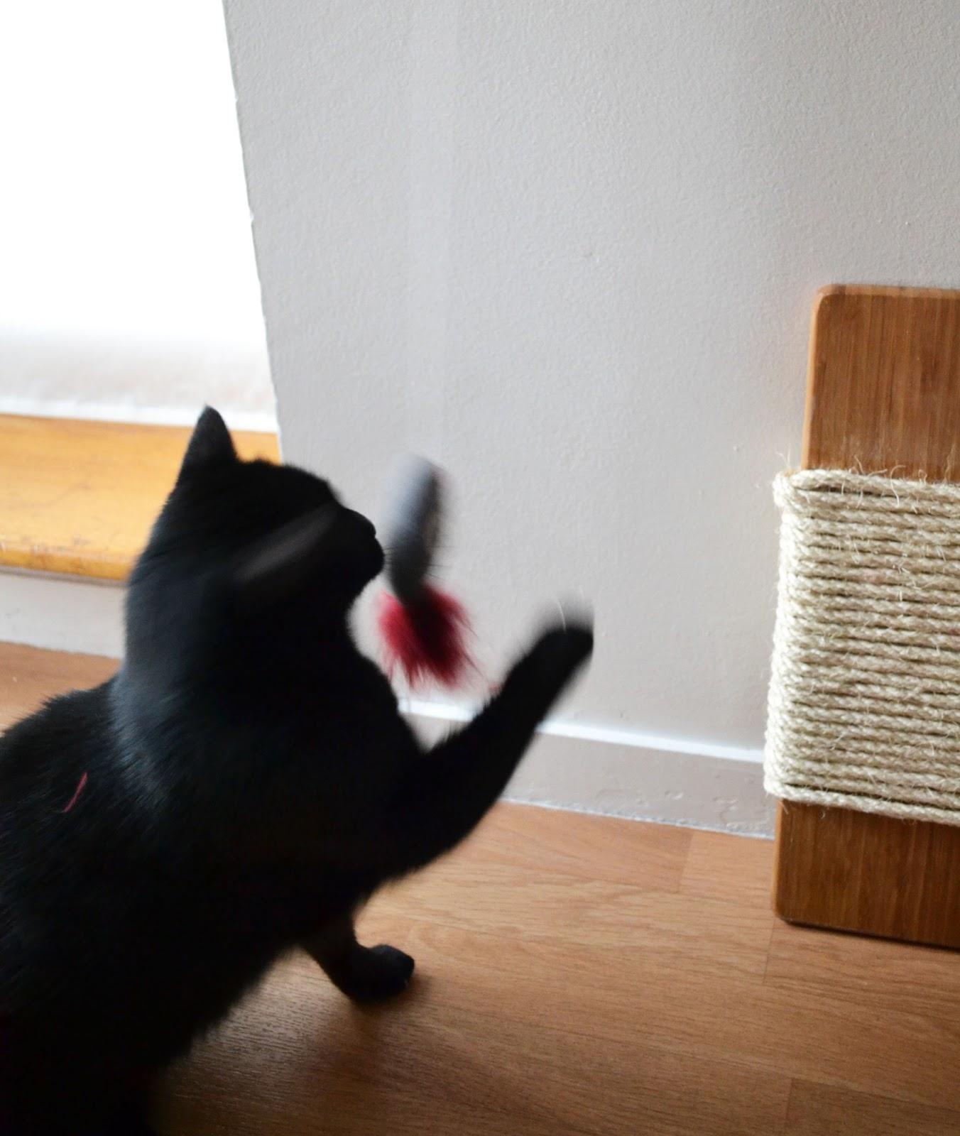 DIY cat accessories