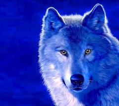A Verdade sobre Lobos, Cordeiros e Pastores