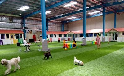 Hình ảnh những chú chó đang vui đùa trong sân bóng.