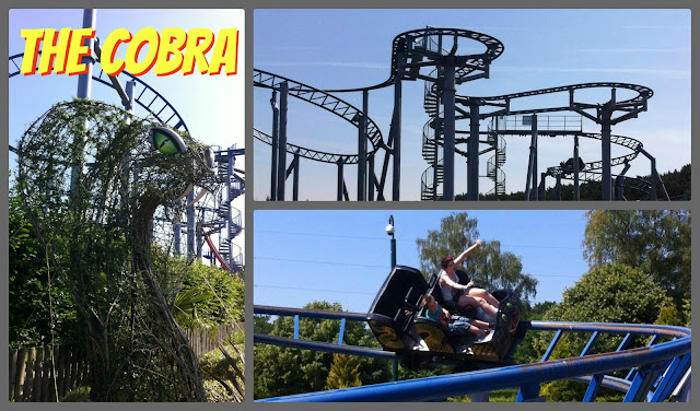 The Cobra - Paultons Park