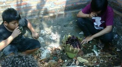 3 Bunga Bangkai tumbuh di halaman Rumah Hantu