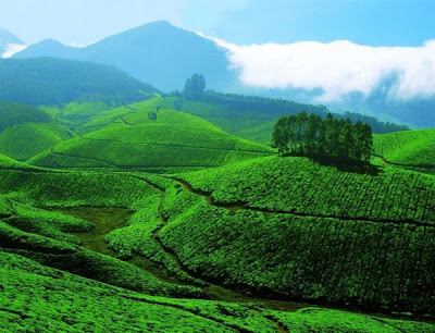 Best Honeymoon Destinations In India - Munnar