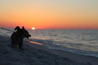dog Beaches open on Pensacola Beach, FL