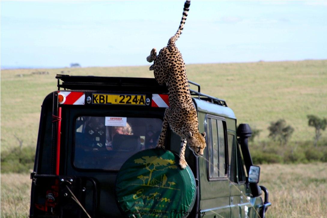 Vacaciones de Safari Africano - vacaciones en Tanzania y Kenia, África
