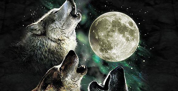 Lobos aullando a la luna. Empieza uno y todos le siguen. Como con los ...