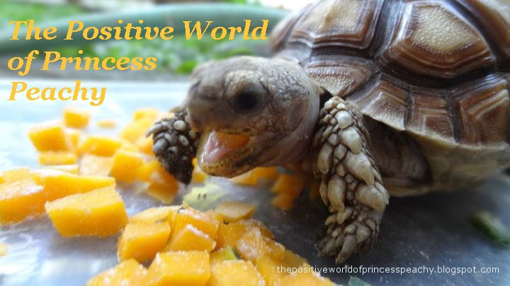 The Positive World Of Princess Peachy, The Happy Sulcata Tortoise