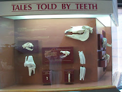 NM Natural History Museum.