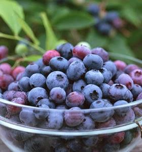 buah bilberry