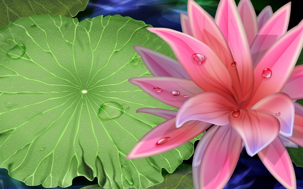 Best Lotus Flower Wallpaper  Nature Wallpaper