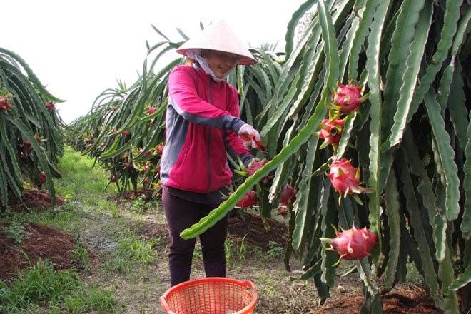 Nông sản XK sang Trung Quốc: Cảnh giác với tin đồn