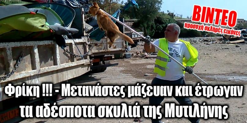 Φρίκη !!! – Μετανάστες μάζευαν και έτρωγαν τα αδέσποτα σκυλιά της Μυτιλήνης (ΒΙΝΤΕΟ)