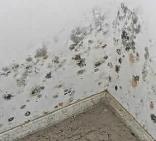 Reformas sin fronteras asesoramiento gratuito para las - Quitar humedades pared ...