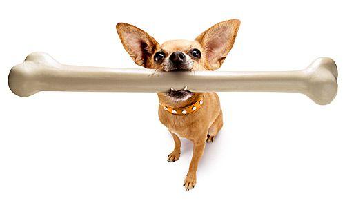 Alasan Kenapa Anjing Suka Menggigit Tulang [ www.BlogApaAja.com ]