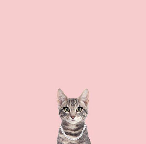Blog 29 Black Street Pink Cat LOVE