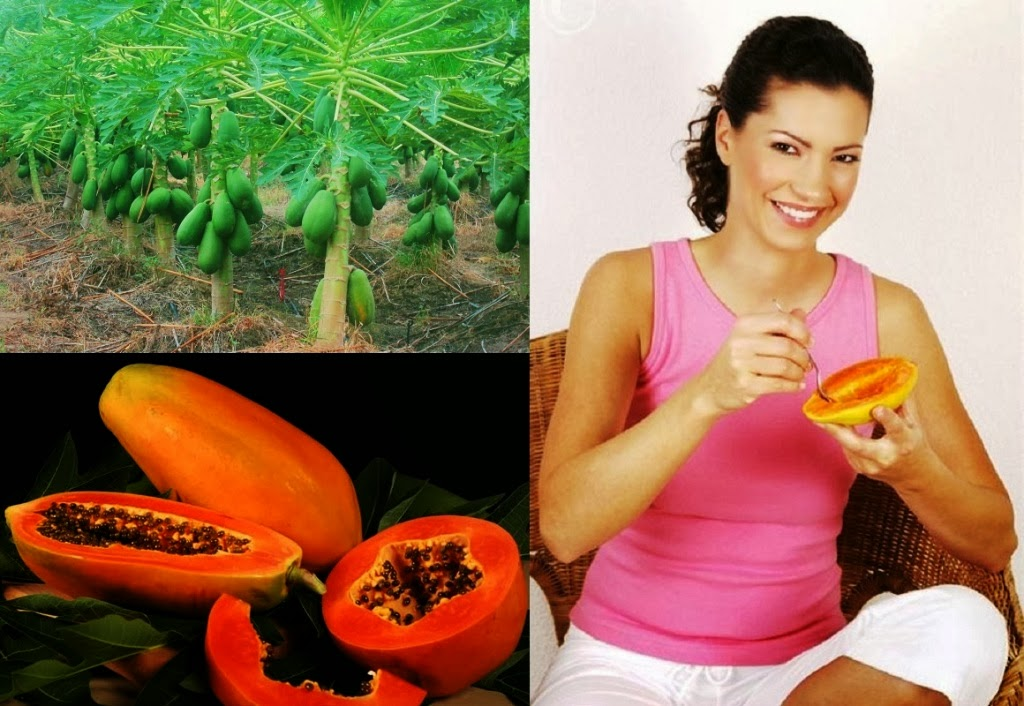 Papaya Farming Business