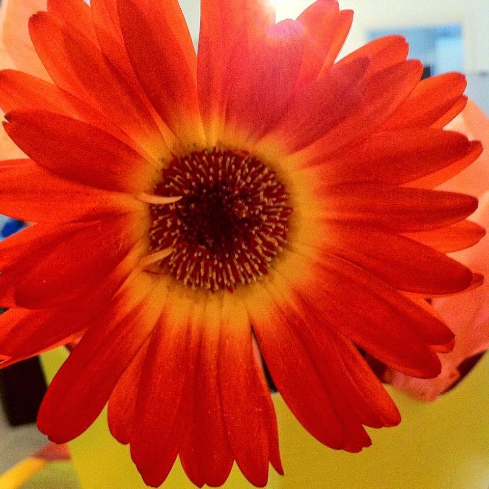 Linda esta flor 2014