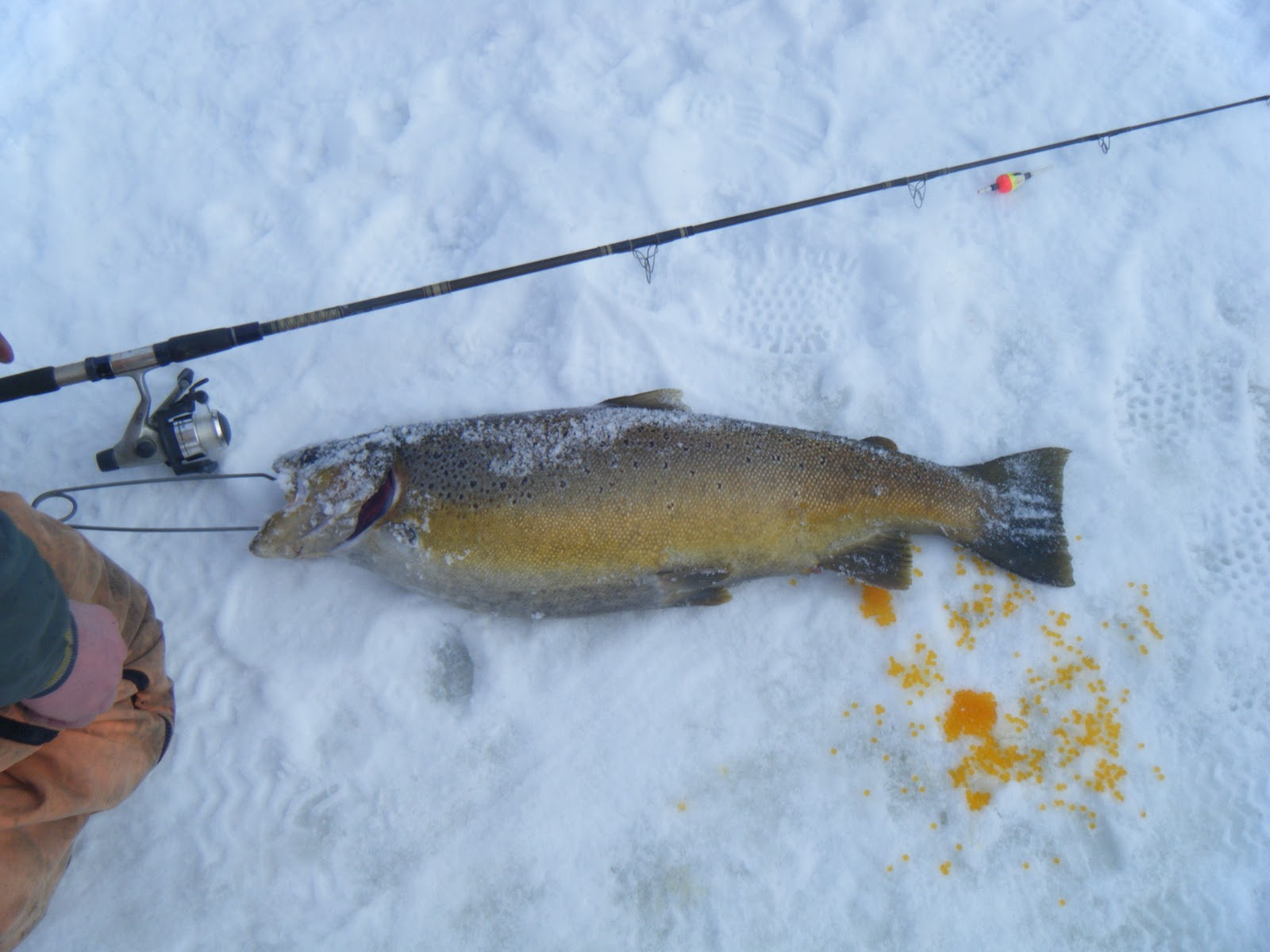 Ice fishing bait for Ice fishing trout lures