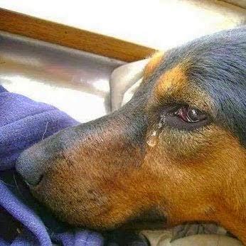 Desabafo contra a crueldade com os animais