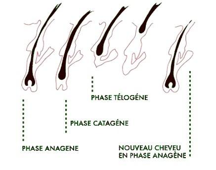 La coloration pour cheveux avec trois huiles