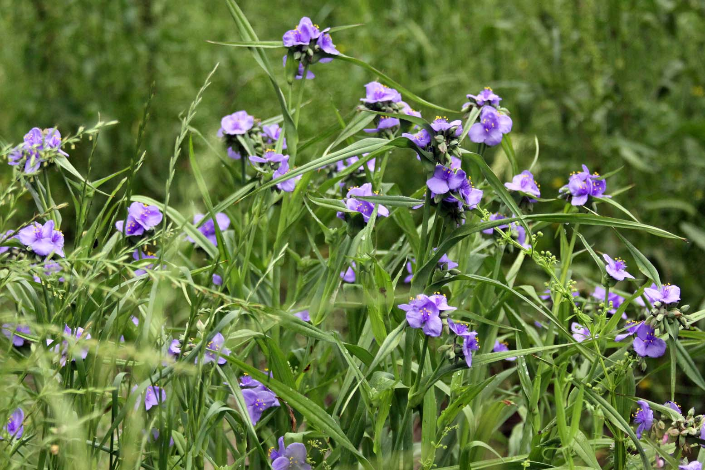 Southern Lagniappe Splendor In The Grass