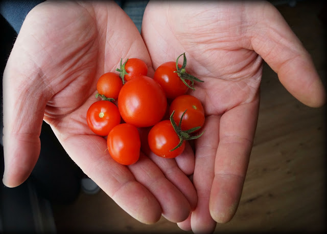 little tomatoes - 'growourown.blogspot.com' ~ an allotment blog