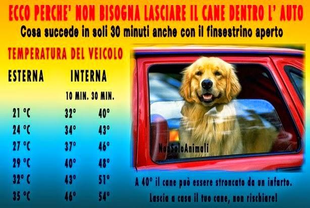Cane da solo nell'auto=Morte!
