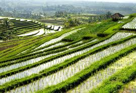 Pertanian Thailand Pantas Ditiru Pusat Ilmu Pertanian Terintegrasi