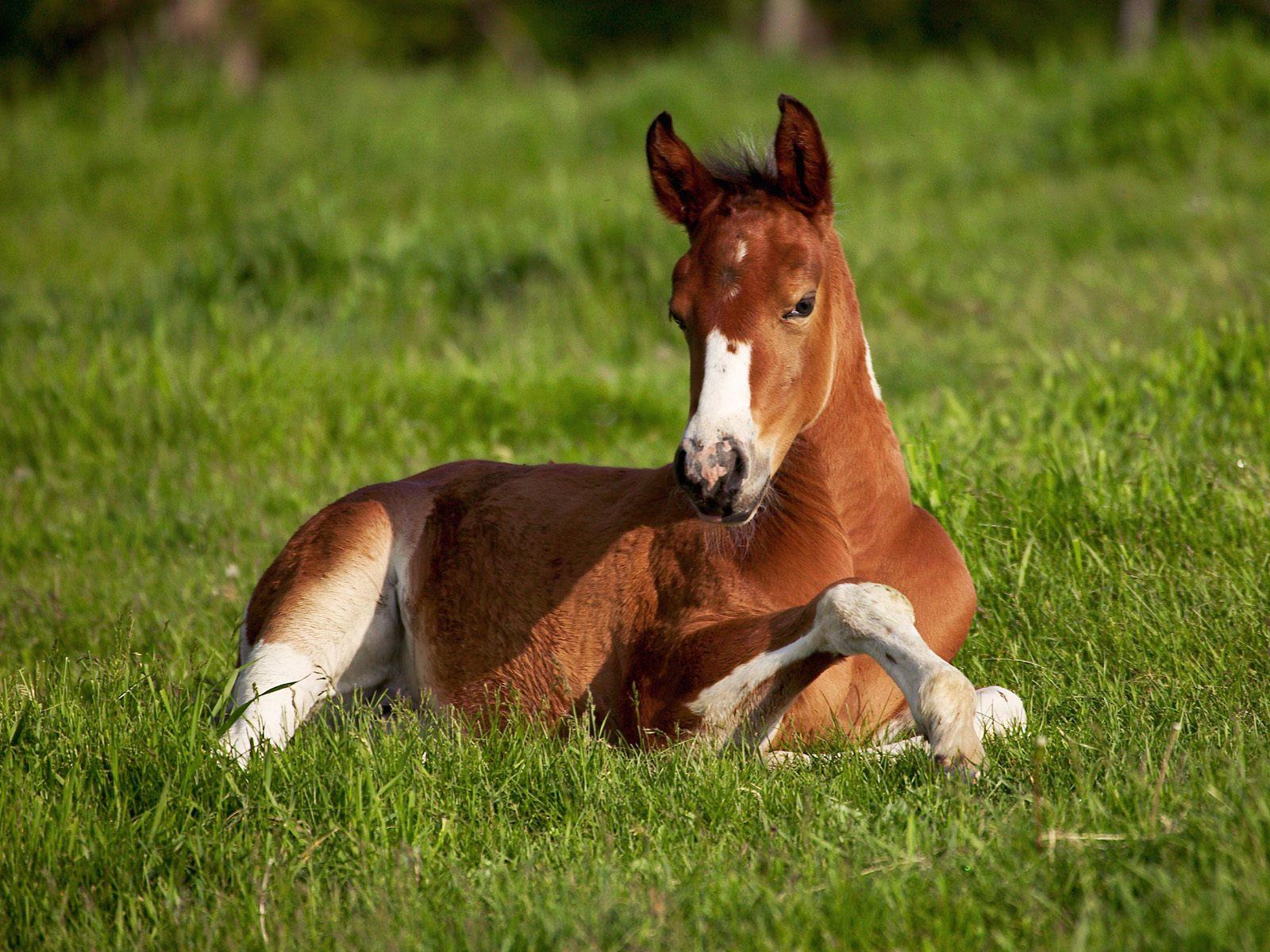 http://1.bp.blogspot.com/-5z56rbAeb7A/ThuQiQwnnvI/AAAAAAAABg8/a9_GvIM1ZXc/s1600/one-horse-power-having-a-rest-cute-little-horse-pictures-wallpapers.jpg