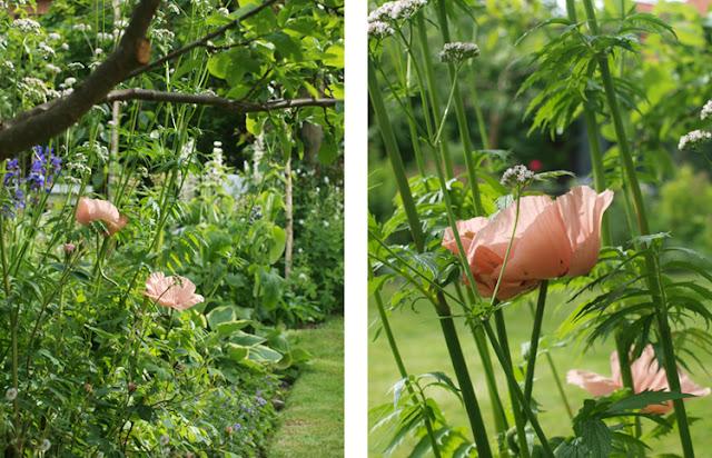Romantisk have i midsommeren
