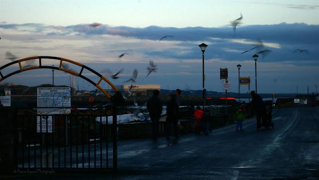 Birds paradise at  Claddagh Quay