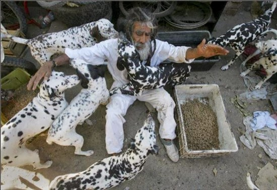 Disney's 101 Dalmatians Inspires Dog Lover to Take in as Many Spotted Canines as He Can Find