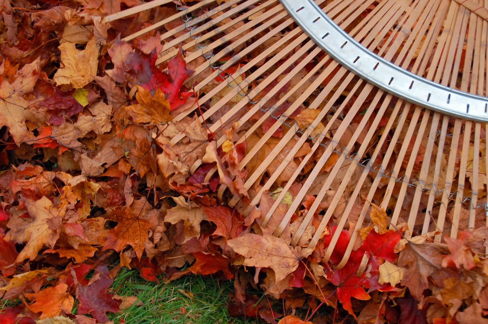 Image result for raking leaves picture