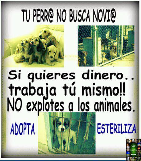 NO A LA VENTA DE ANIMALES, QUE SE BUSQUEN UN NEGOCIO HONRADO O QUE SE SUICIDEN