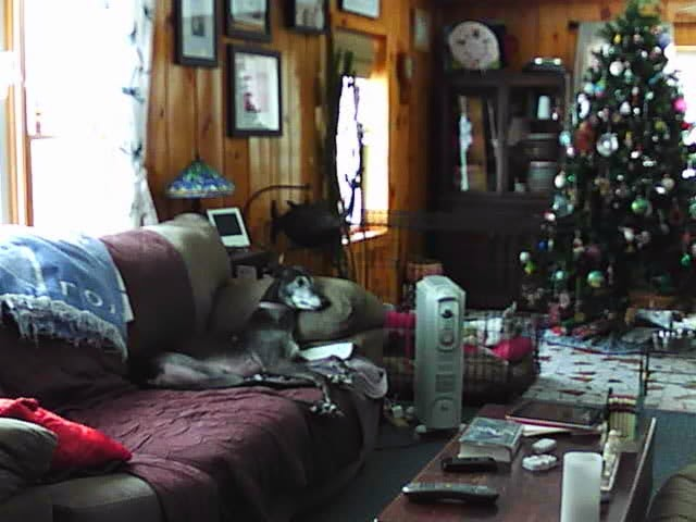 Bettina and Blue from the web cam