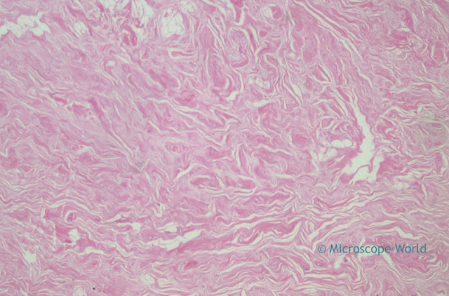 Microscopy image of mammary gland at 40x.