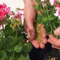 El abono orgánico se hace en invierno u otoño, extendiendo en el suelo una capa de 2 ó 3 cm