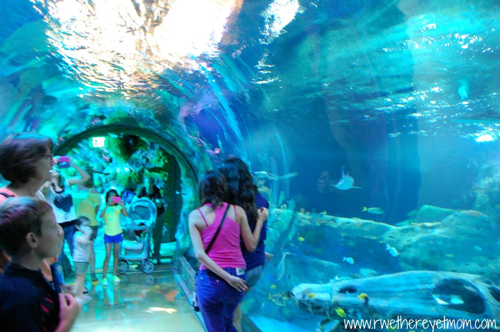 Grapevine Sea Life Aquarium Grapevine Texas R We There Yet Mom